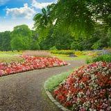 Callejón hermoso con las flores florecientes Fotografía de archivo