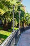 Callejón hermoso de la palmera con las linternas del vintage en un parque en otoño fotos de archivo libres de regalías