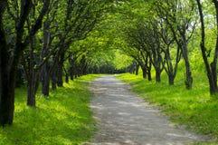 Callejón hermoso de la primavera en el parque Foto de archivo libre de regalías