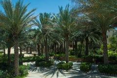 Callejón hermoso de las palmeras en hotel de lujo del desierto árabe Foto de archivo libre de regalías