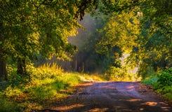 Callejón hermoso de los árboles iluminado por la luz de la mañana Foto de archivo libre de regalías