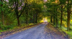 Callejón hermoso de los árboles iluminado por la luz de la mañana Fotos de archivo libres de regalías