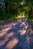 Callejón hermoso de los árboles iluminado por la luz de la mañana Fotografía de archivo libre de regalías