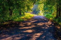 Callejón hermoso de los árboles iluminado por la luz de la mañana Imagen de archivo libre de regalías