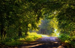 Callejón hermoso de los árboles iluminado por la luz de la mañana Fotografía de archivo