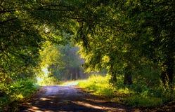 Callejón hermoso de los árboles iluminado por la luz de la mañana Imagen de archivo