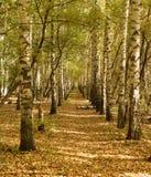 Callejón hermoso del otoño en el bosque Foto de archivo