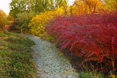 Callejón hermoso del otoño en el parque con los árboles coloridos Imagen de archivo