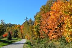 Callejón hermoso y colorido del otoño en un parque Imagenes de archivo