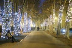 Callejón iluminado del árbol plano Fotografía de archivo libre de regalías