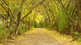 Callejón místico del otoño almacen de video