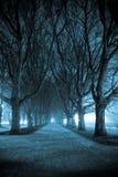 Callejón oscuro del parque Fotos de archivo