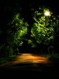 Callejón oscuro del parque Imagen de archivo