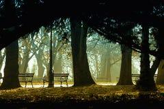 Callejón oscuro por la mañana Foto de archivo