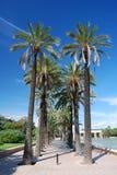 callejón Palma-alineado Foto de archivo