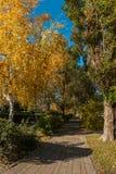 Callejón peatonal de la ciudad del otoño entre árboles hermosos altos Imagen de archivo libre de regalías