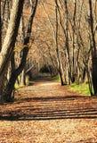 Callejón reservado del otoño Imagen de archivo libre de regalías