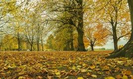 Callejón romántico hermoso en un parque con los árboles coloridos fotografía de archivo libre de regalías