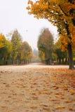 Callejón romántico hermoso en un parque con los árboles coloridos, fondo natural del otoño imágenes de archivo libres de regalías