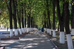 Callejón romántico hermoso en un parque con los árboles coloridos y la luz del sol fotos de archivo libres de regalías
