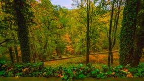 Callejón romántico hermoso en un parque con los árboles coloridos y la luz del sol fondo de la naturaleza del otoño - Bilder fotografía de archivo libre de regalías