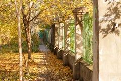 Callejón soleado del otoño a lo largo de la cerca verde hermosa Fotos de archivo libres de regalías