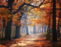 Callejón soleado en parque del otoño foto de archivo
