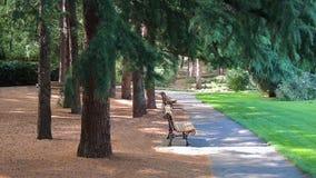 Callejón sombrío en el parque Foto de archivo