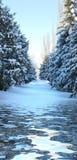 Callejón Spruce nevado Imágenes de archivo libres de regalías