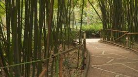 Callejón a través de la arboleda de bambú metrajes