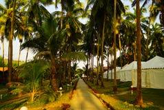 Callejón a través de la arboleda de la palma en centro turístico Fotos de archivo