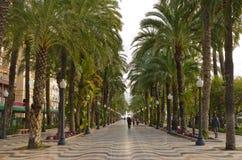 Callejón tropical de la palma en Alicante, España Foto de archivo libre de regalías