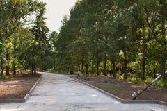 Callejón vacío del parque Renovaciones: reemplazo de luces y reparación de la superficie de la carretera Fotografía de archivo
