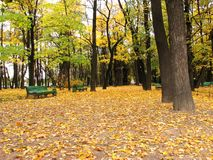Callejón vacío en parque urbano en a Fotografía de archivo