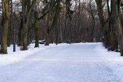 Callejón vacío hermoso en el parque escarchado del invierno rodeado con los árboles El concepto de walkink, forma de vida sana, o fotografía de archivo