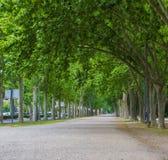 Callejón verde claro de árboles Foto de archivo libre de regalías