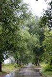 Callejón verde del árbol Foto de archivo libre de regalías