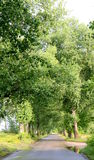 Callejón verde del árbol Foto de archivo