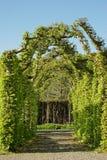 Callejón verde en el jardín Imágenes de archivo libres de regalías