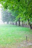 Callejón verde en parque del verano en la mañana con niebla Fotos de archivo libres de regalías