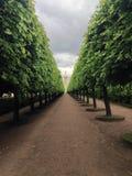Callejón y árboles Imagen de archivo