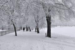 Callejón y árboles del parque en la nieve Imagen de archivo