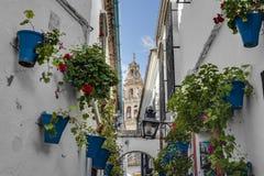 Calleja de lasy Flores w cordobie, Andalusia, Hiszpania Fotografia Stock