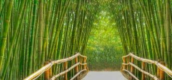 Callejón de bambú Foto de archivo