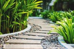 Callejón en jardín tropical Imagen de archivo libre de regalías