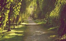 Callejón hermoso del árbol en otoño temprano con la luz de oro que filtra adentro Imagen de archivo libre de regalías