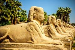 callejones de la esfinge Luxor fotografía de archivo