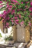 Calles de la ciudad de Neorio en la isla de Poros, Grecia; Árboles con rosa Imagenes de archivo