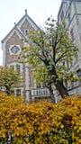 Calles de noviembre Riga fotos de archivo