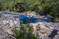 Wild flowers and river, Chapada Diamantina, Bahia, Brazil. Calliandra plant in the foreground and river in the background, Chapada Diamantina, Bahia, Brazil royalty free stock image